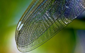 dragonfly-wing-615240__180